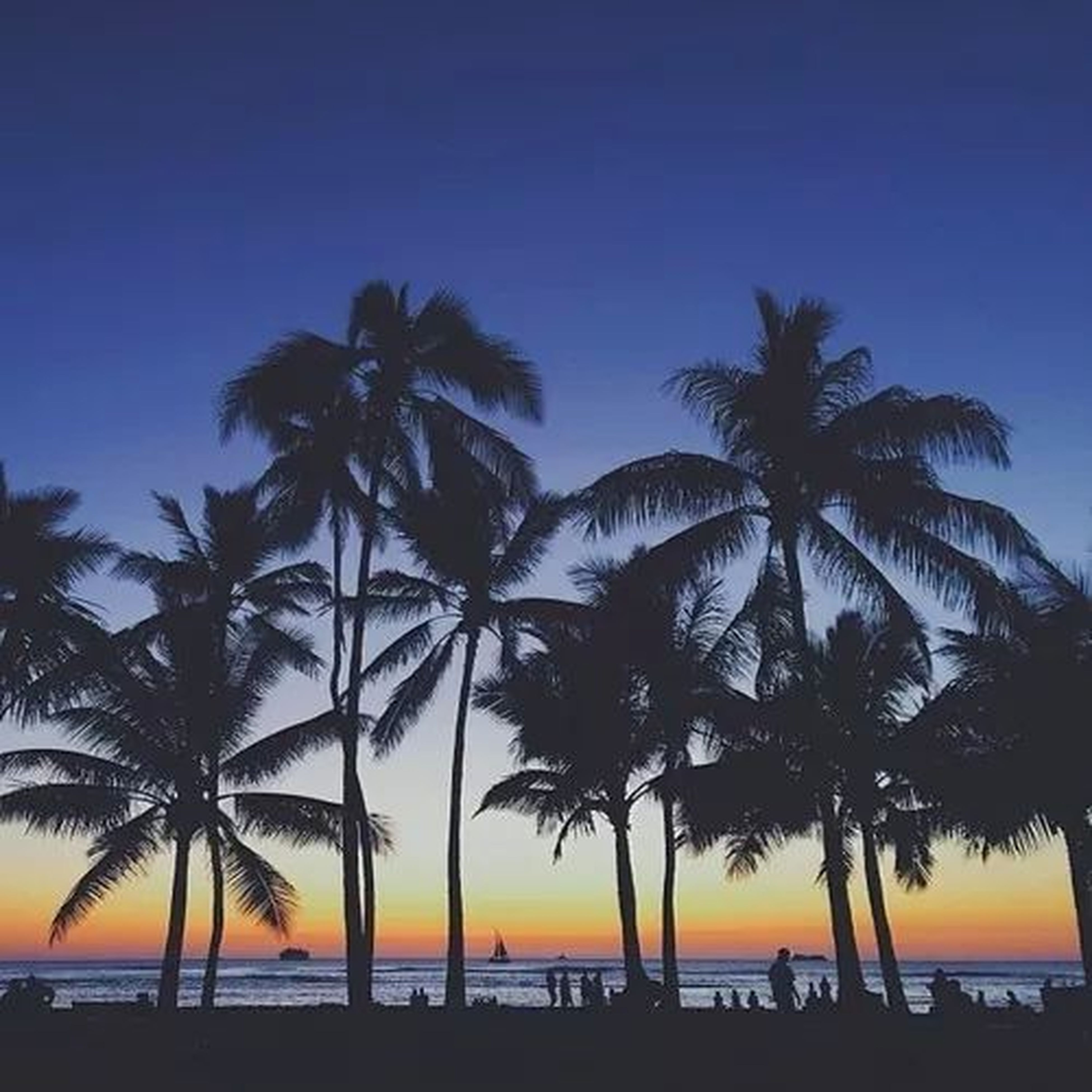 palm tree, sea, water, beach, horizon over water, tranquility, tranquil scene, scenics, tree, beauty in nature, sunset, silhouette, nature, sky, shore, idyllic, tree trunk, vacations, incidental people, blue