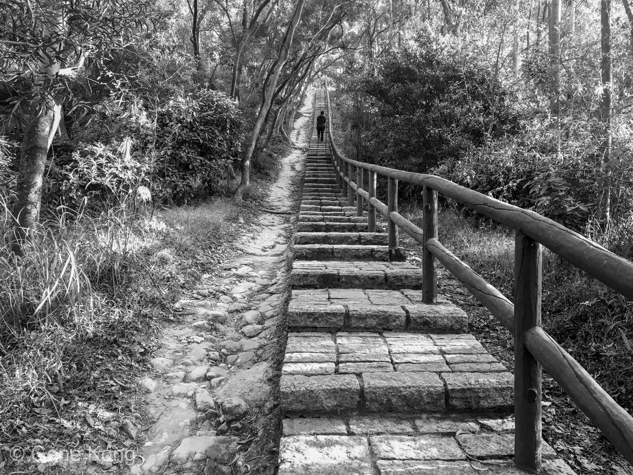 It's a long road Leading Lines Hand Rail Walkway Beauty In Nature Outdoors Day Tranquility Steps Steps And Staircases The Way Forward Railing Nature Nature Photography Natural Beauty Landscape_photography One Person Trail Path In Nature On The Road Blackandwhite Monochrome Depth Of Field Tree Uphill The Week On EyeEm