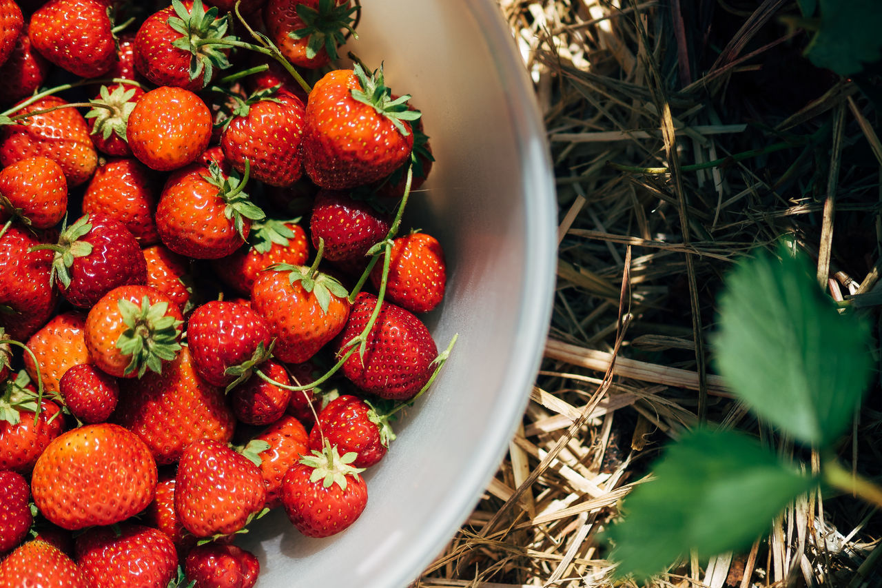 Some strawberries for the lunch Bowl Close-up Day Food Food And Drink Freshness Fruit Healthy Eating High Angle View Indoors  Nature No People Red Strawberry