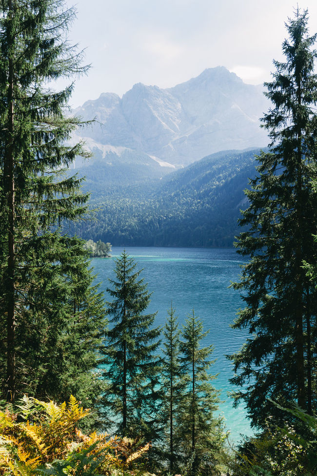scenic view of lake and mountains between trees Adventure Alps Beauty In Nature Eibsee Forest Hike Horizontal Lake Landscape Mountain Mountain Range Nature Nature No People Outdoors Pine Tree Scenic View Sky Tree Wander Wanderlust Water Waxenstein Zugspitze