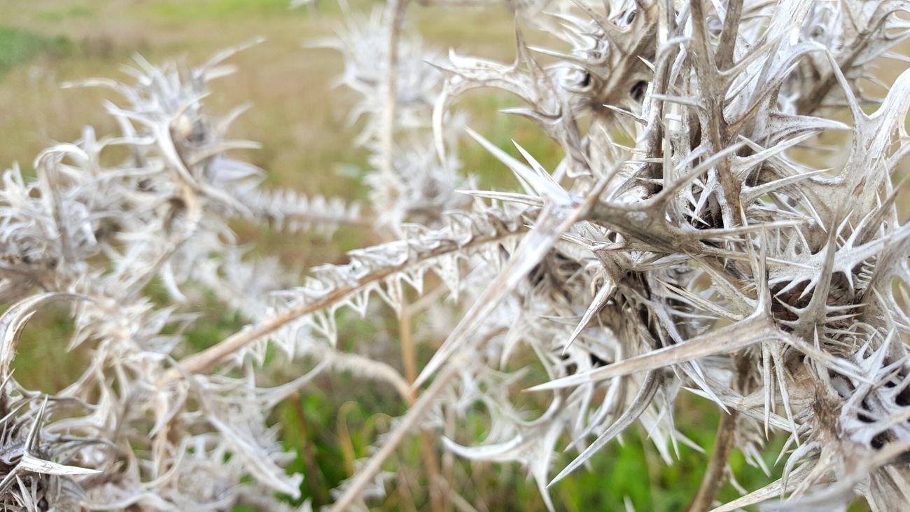 Nature Close-up Winter Plant Alentejo EyeEm Nature Lover Eye4photography  EyeEm Best Shots