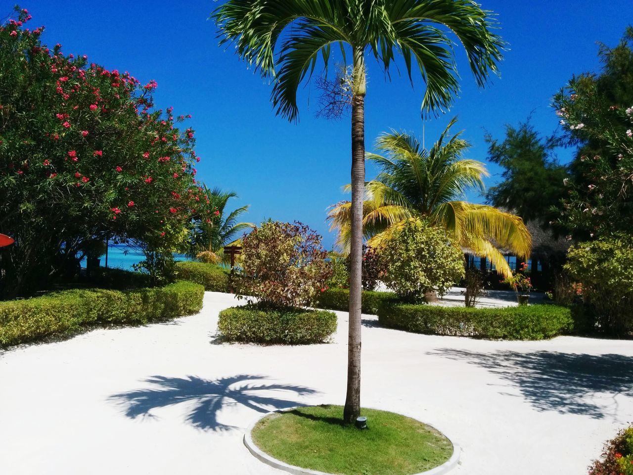Postcard pic Maldivesphotography Cleanbeaches Maldives Resorts Maldives