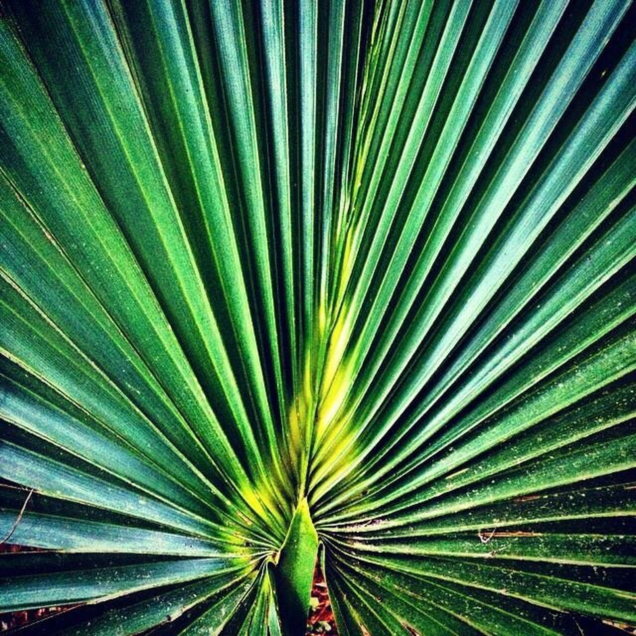 Palmetto South Carolina Green Palm Flora Color Palette
