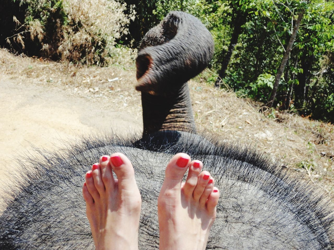 Beautiful stock photos of elephant, Animal Themes, Animal Trunk, Animals In The Wild, Barefoot