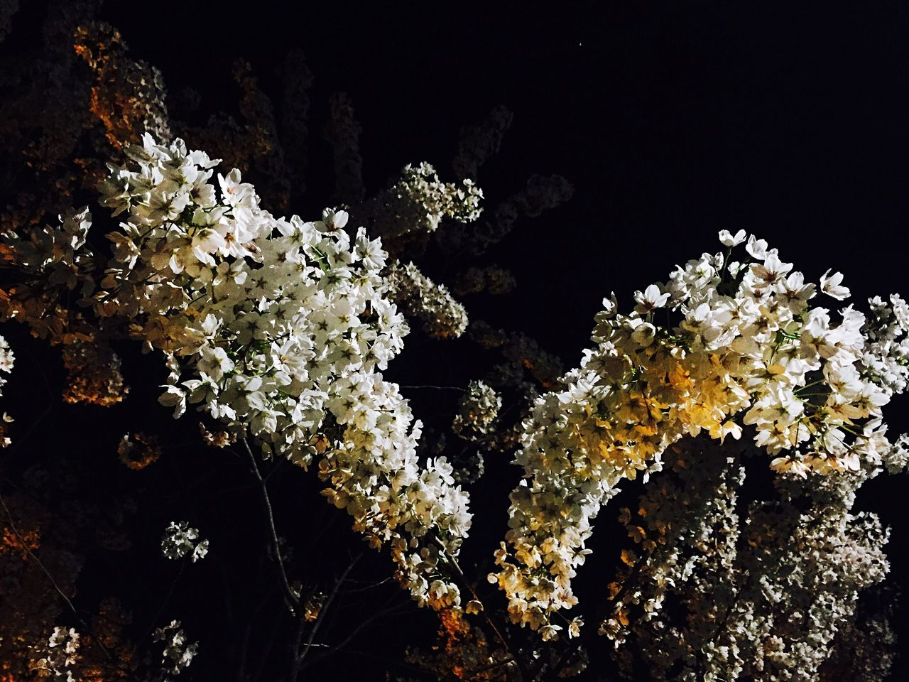 Flowers Flower Flower Collection IPhoneography Iphonephotography Iphonography ByAlex Nightphotography Night