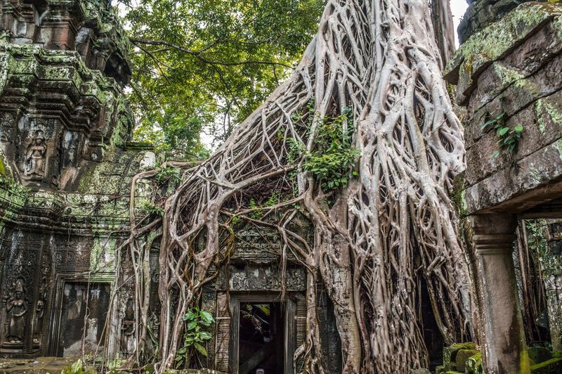 Abandoned Cambodia Forest Jungle Outdoors Ruined Ruins South East Asia Ta Prohm Tomb Rider Traveling