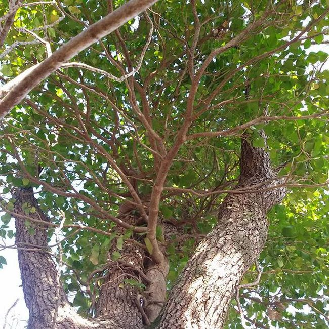 Nature Ivy Greenwinter