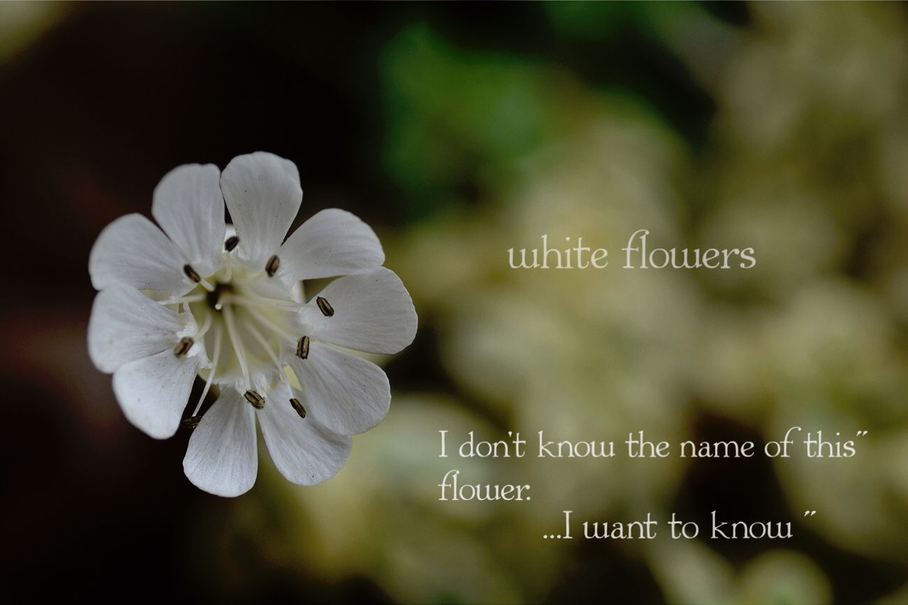 Nikon D5200 TAMROM EyeEm 2015 Japan 花 Cute Flower In My Garden... 庭に咲く花 何て言う名前の お花かしら⁇