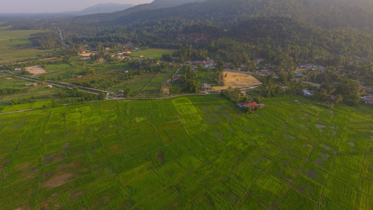 All about green 😀 Agriculture Landscape Field Green Color High Angle View Scenics Tree No People Drone  Dronephotography DJI Phantom 3 Professional Dji Dji Phantom DJI Phantom 3 Terengganu, Malaysia Malaysia Beautifulterengganu Dji Pilot