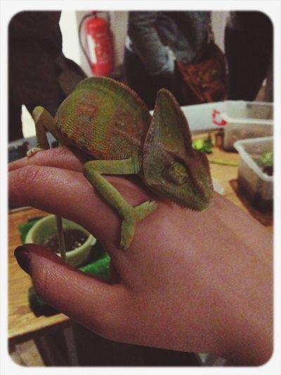 Wearing the latest in chameleon attire Charmeleon Little Venice