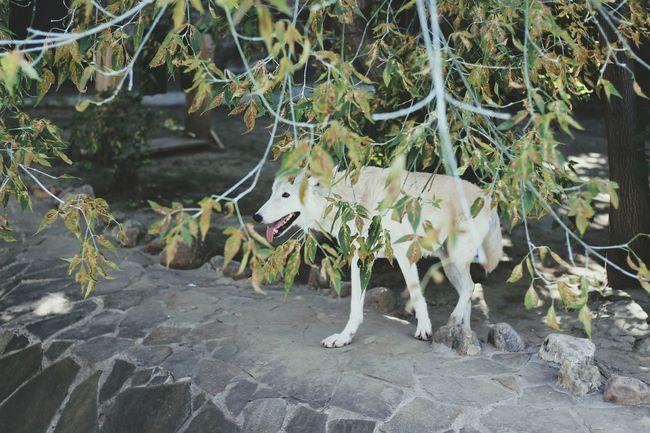 полярный волк Woolf White Polar Wolf Zoo Wild лето 2016