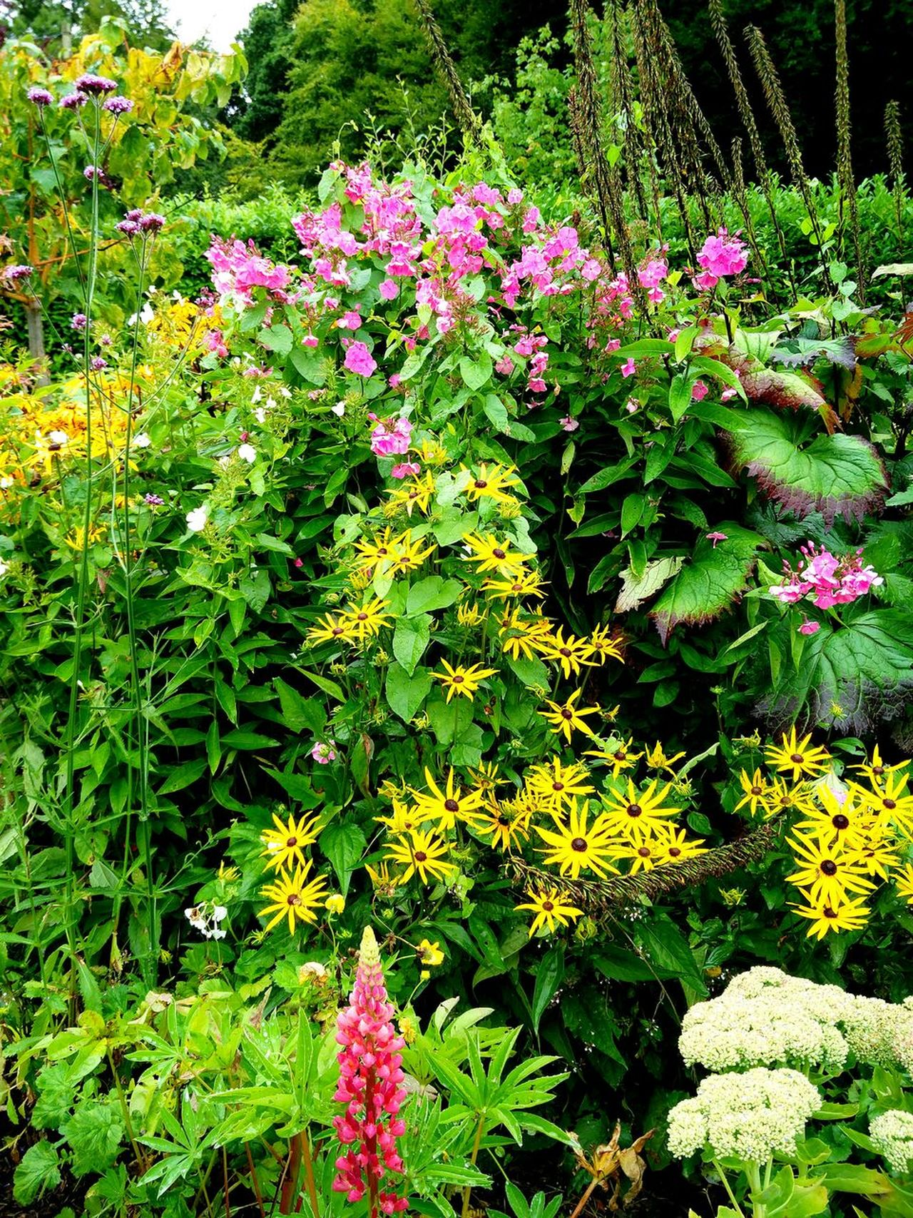 Garden EyeEmNewHere Leafs 🍃 Wintertime Beauty In Nature Flower Head Blooming Plant Outdoors Freshness Green Leaves Plants 🌱 Leaves🌿 Foliage, Vegetation, Plants, Green, Leaves, Leafage, Undergrowth, Underbrush, Plant Life, Flora Green Green Green!  Formal Garden Garden Photography