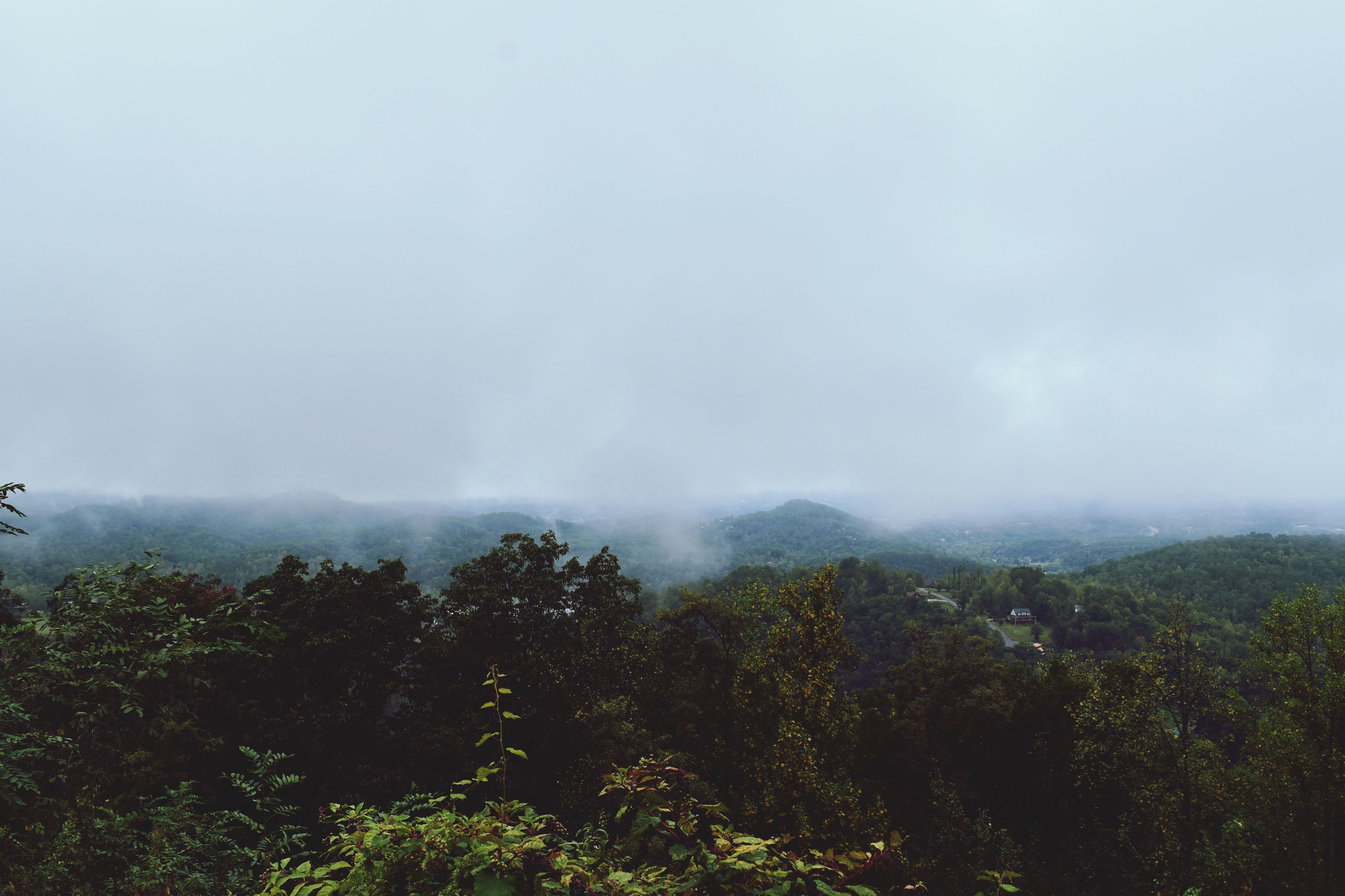 fog, foggy, beauty in nature, scenics, weather, tranquility, mountain, tranquil scene, tree, nature, landscape, copy space, sky, growth, idyllic, non-urban scene, day, outdoors, no people