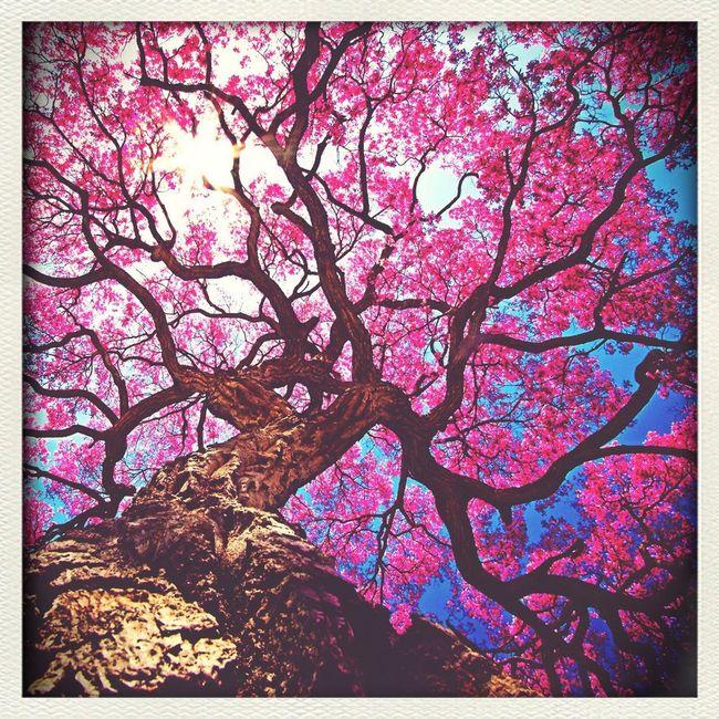Такое красивое дерево живёт в Испании ( Сан-Хуан ) First Eyeem Photo