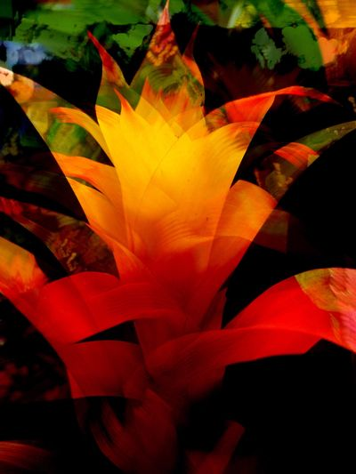 Bromeliads Hello World Art, Drawing, Creativity Orange By Motorola Art Gallery Apache Junction Check This Out