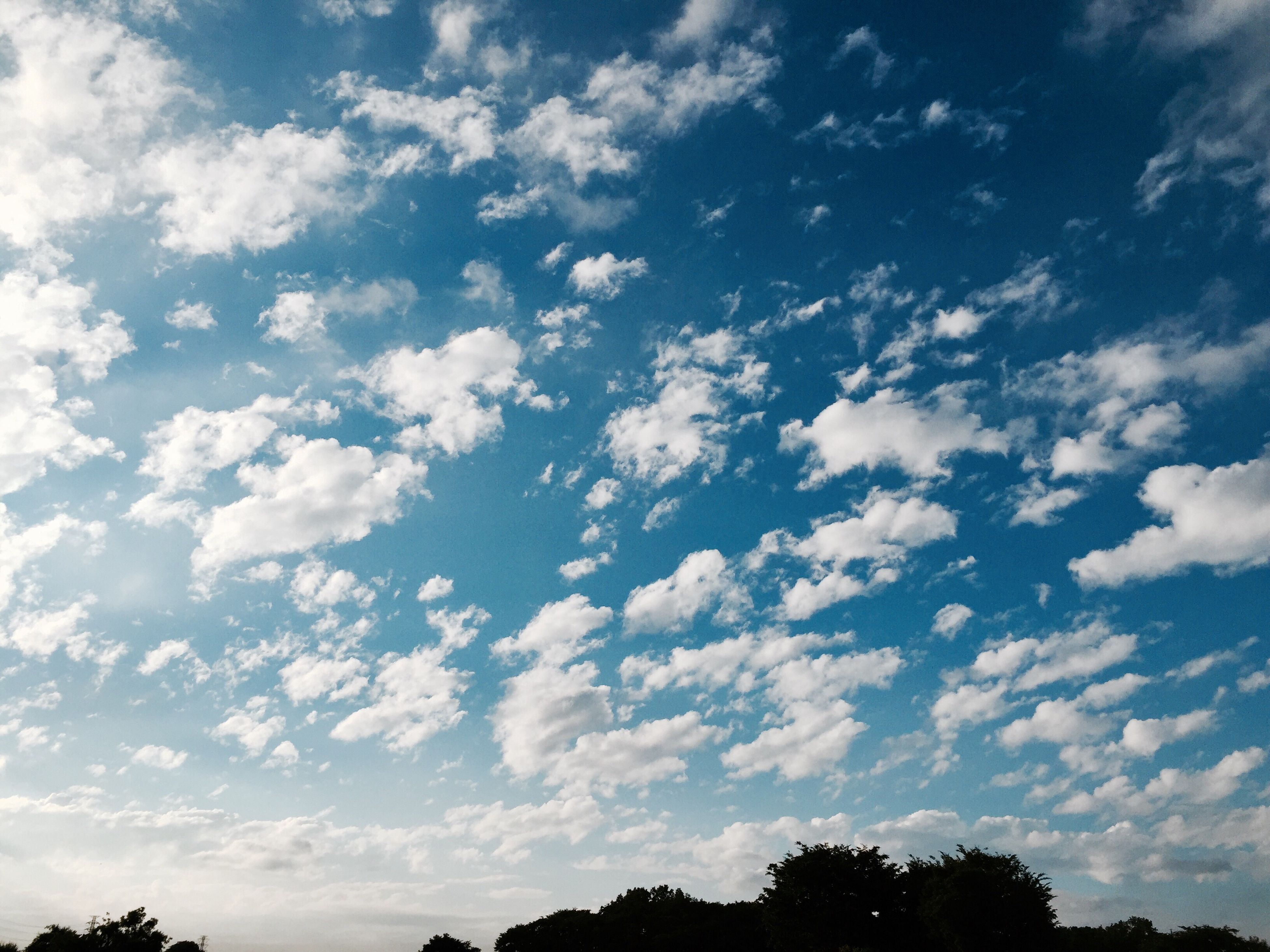 beauty in nature, sky, nature, scenics, cloud - sky, tranquility, low angle view, no people, tranquil scene, tree, outdoors, day, blue, backgrounds