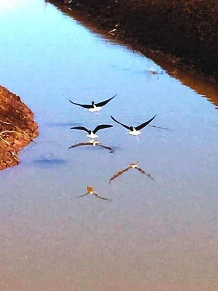 Low Flying Birds Below Radar Flying Birds Chuylui Photography