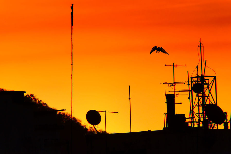 Silhouette Sunset Outdoors Sky No People Flying Nature Bird City Landscape Orange Sky Orange Orange Color