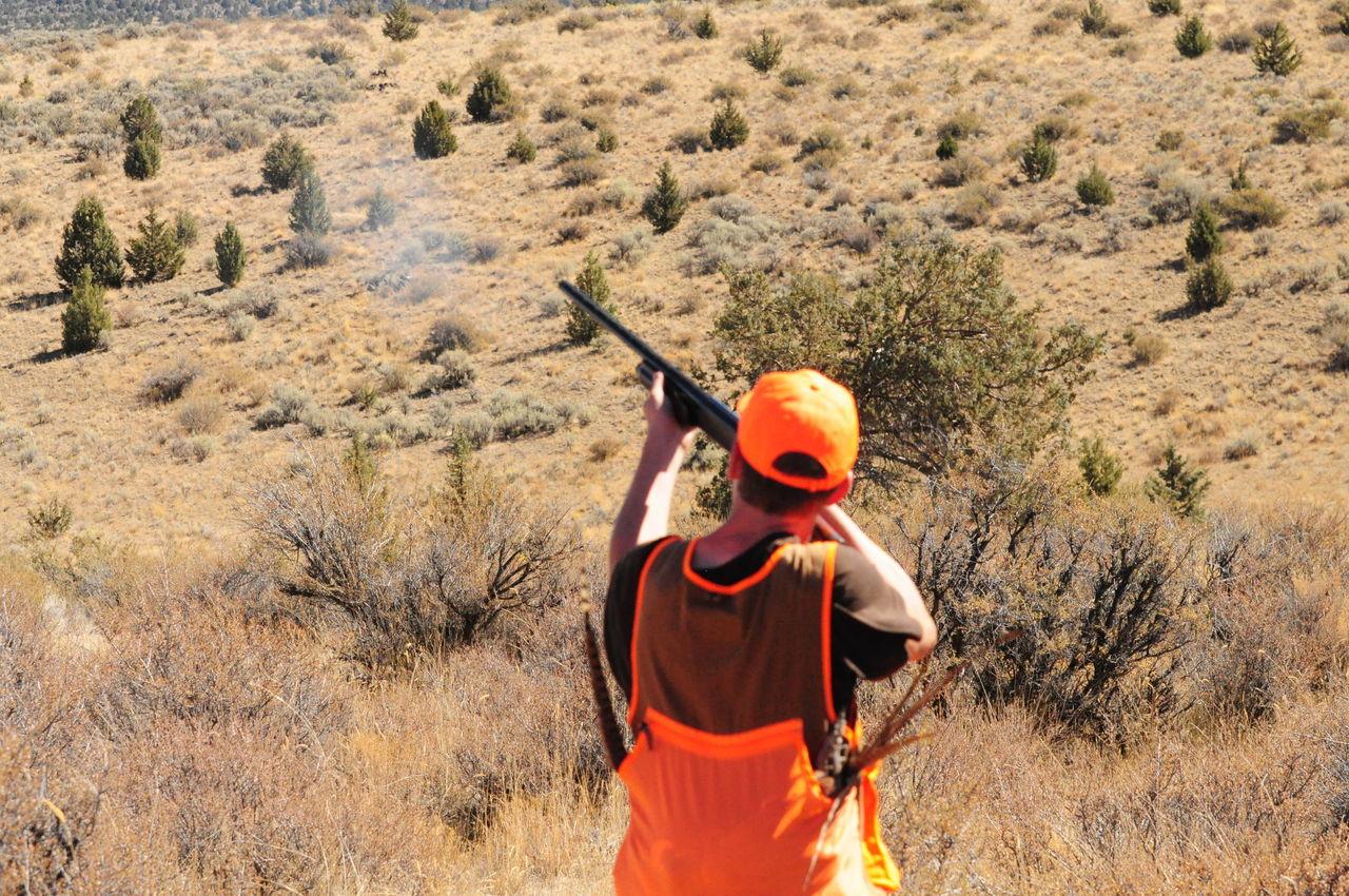 Beautiful stock photos of jagd, Aiming, Day, Field, Grass