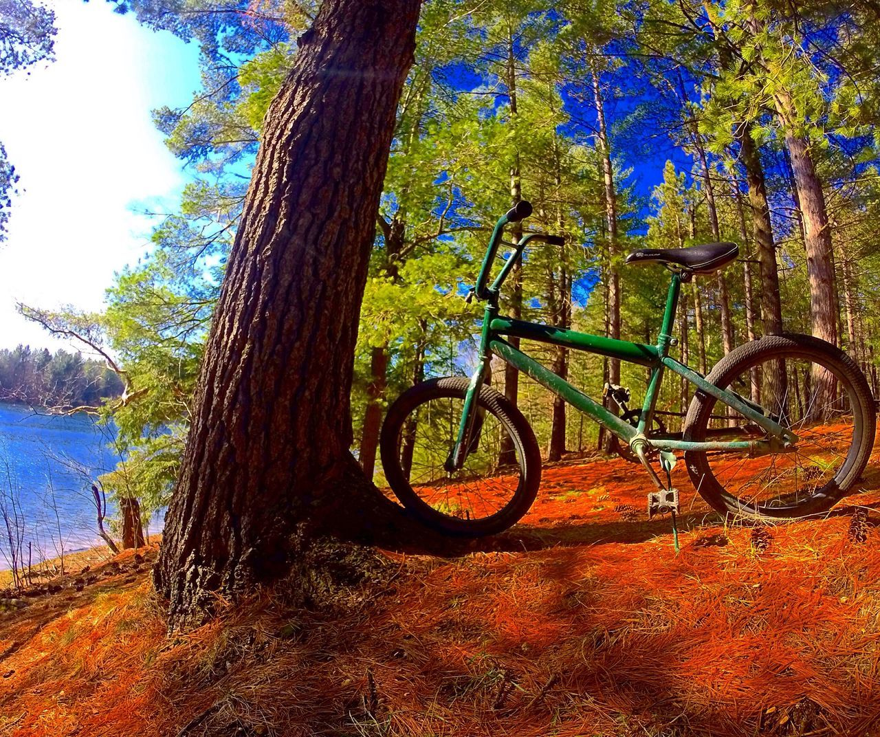 Old Bike New Day Bmx  Woods Nature Nature_collection Nature Photography Naturelovers Lake Lake View Taking Photos Colors Spring Nomi Northern Michigan Getoutside Gopro The Great Outdoors With Adobe Amateurphotography Chaos Telling Stories Differently