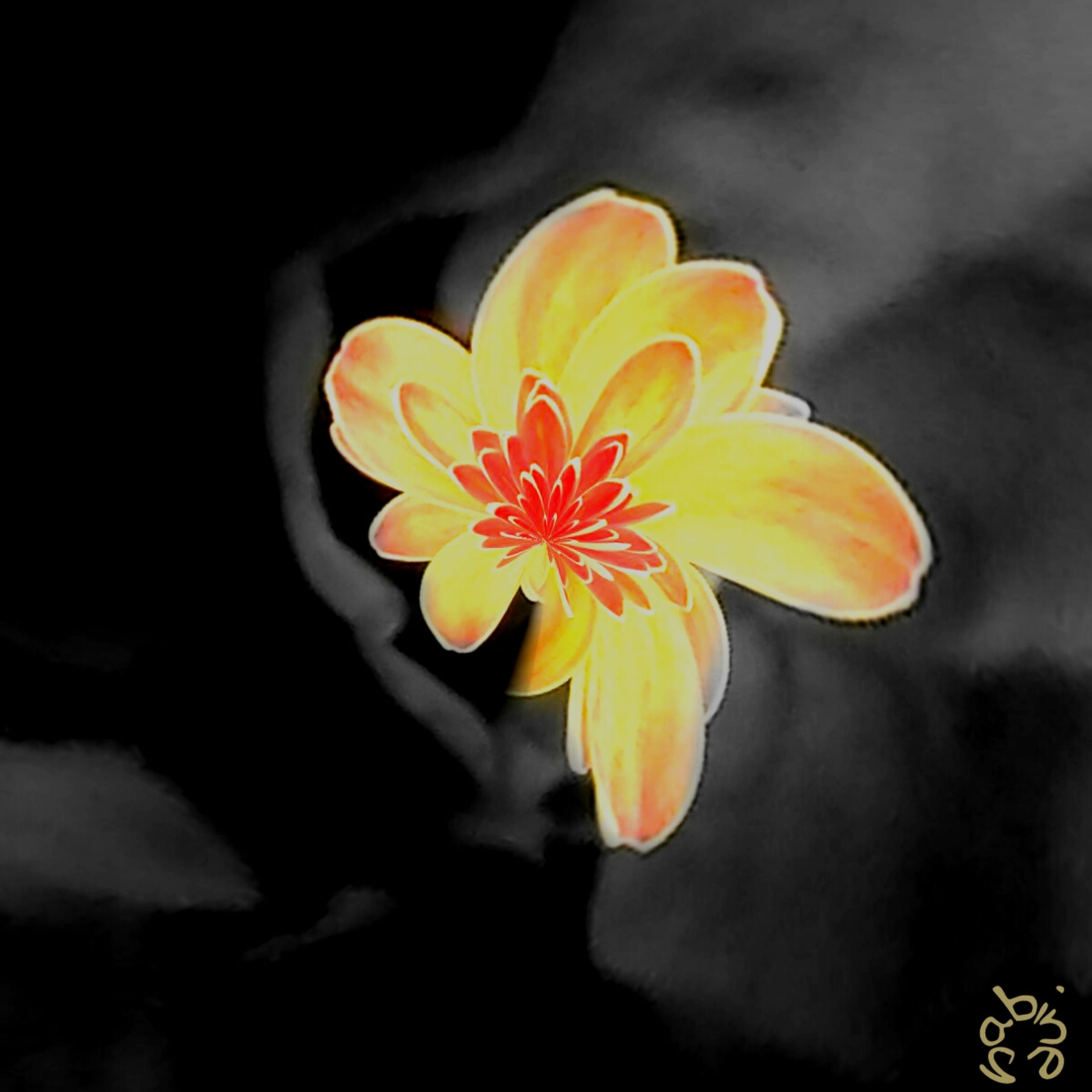 flower, petal, flower head, fragility, freshness, yellow, beauty in nature, close-up, single flower, blooming, growth, nature, pollen, in bloom, plant, stamen, blossom, studio shot, focus on foreground, orange color