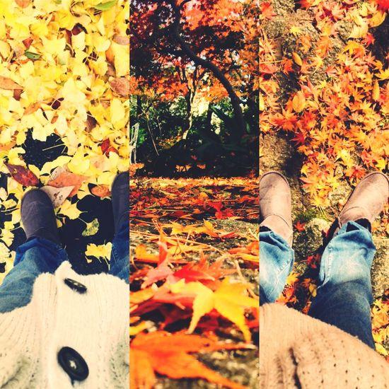 Travelingfoot 紅葉の季節です