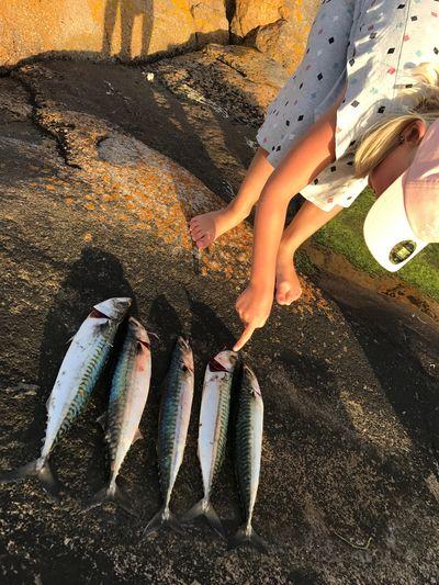 EyeEm Selects Fish Fishing Makrill