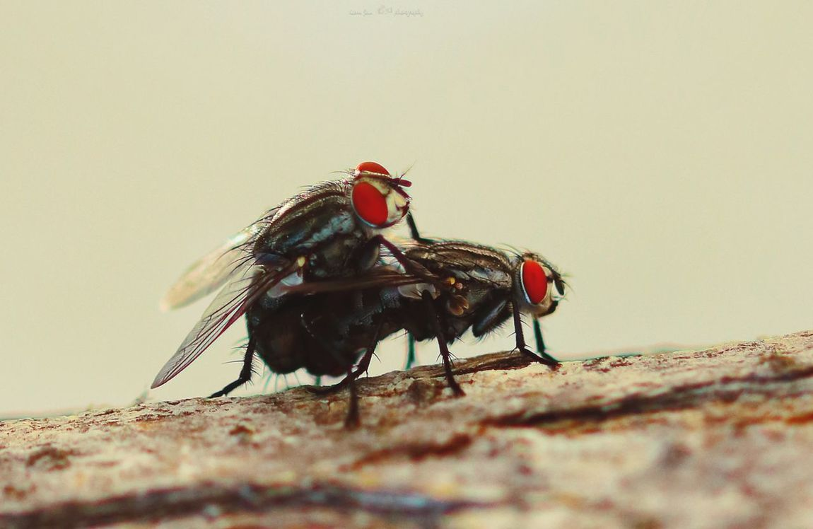 EyeEm Selects Insects  Insect Love Insect Photo