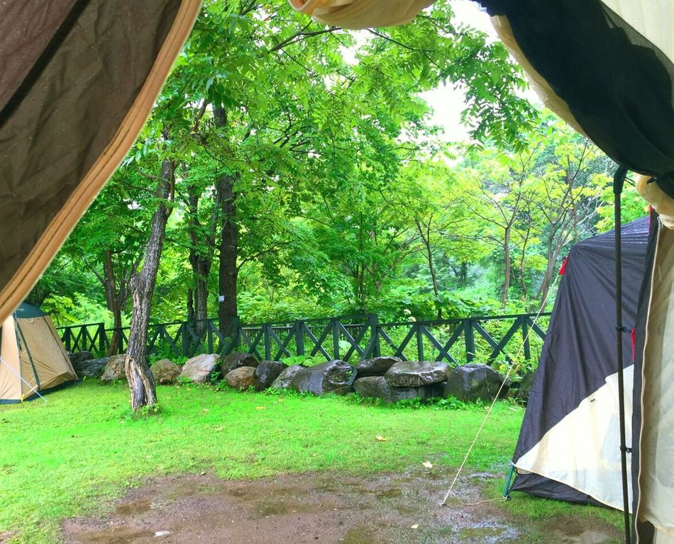 Camping Hello World Taking Photos Enjoying Life Relaxing Green Photography EyeEm Nature Lover From My Point Of View Green Leaves