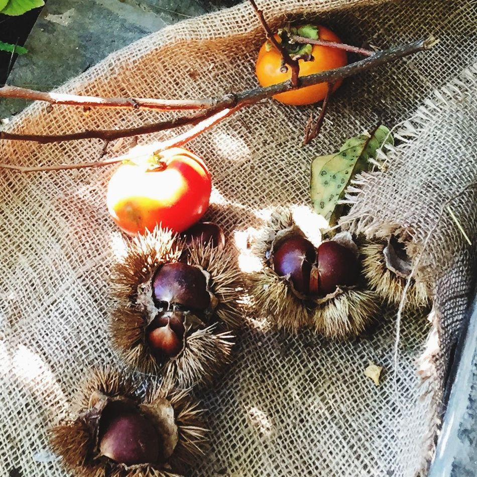 秋の味覚 柿 栗