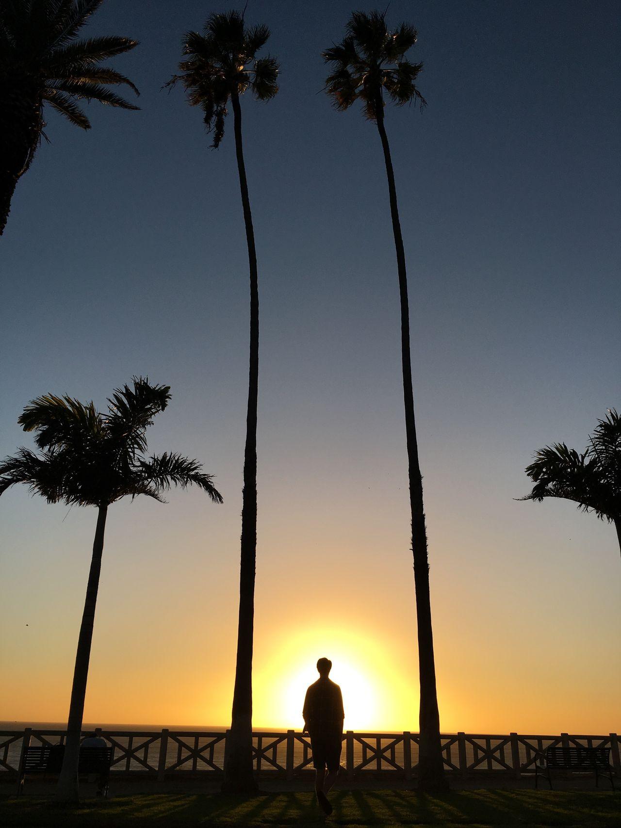 Santa Monica Sunset Palm Tree Beach Silhouette Fine Art Photography EyeEm Best Shots California Santa Monica Sunset