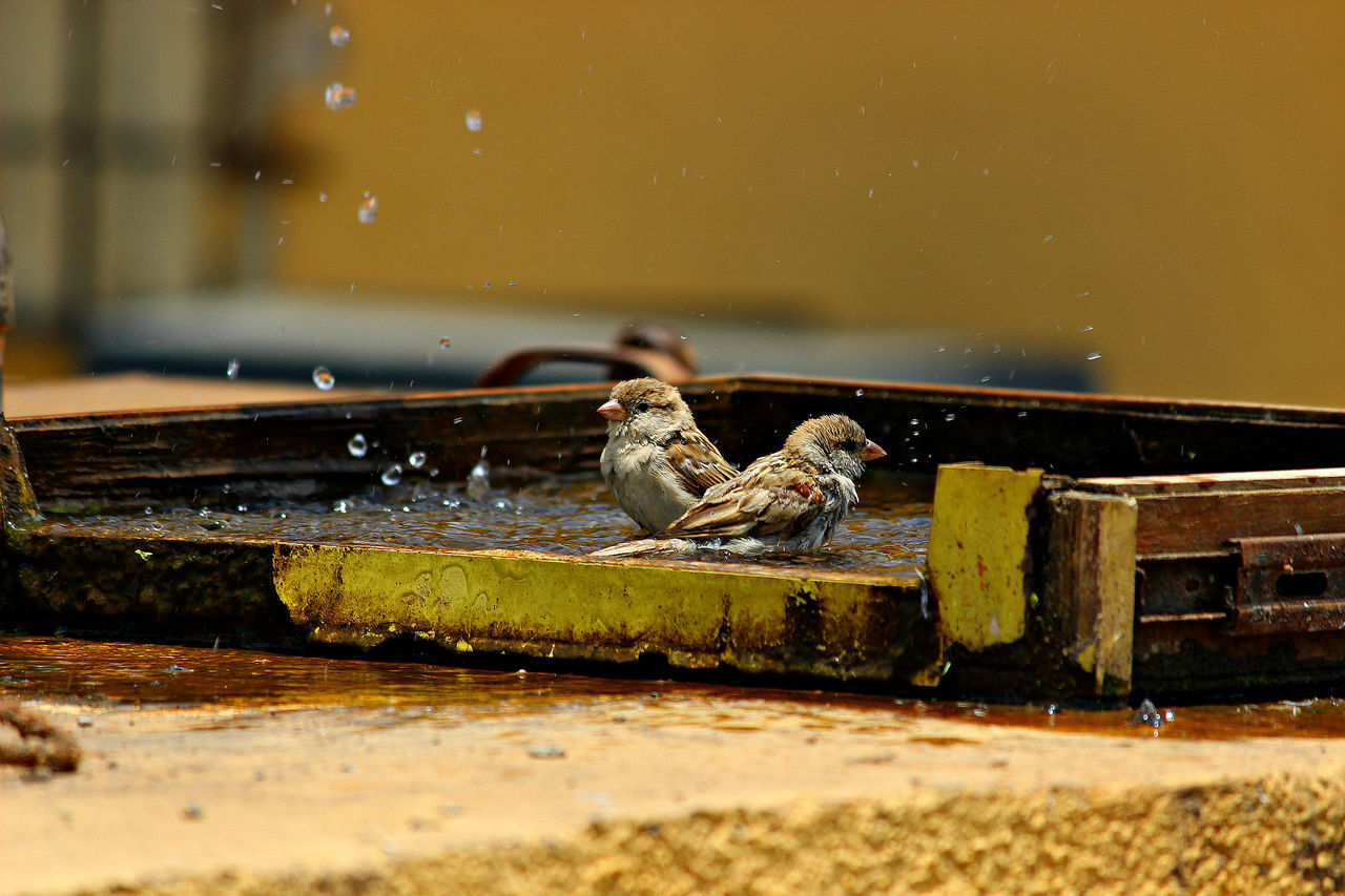 #bathtime #birds #EyeEm #eyembestshot #hot #summer Day Nature Outdoors