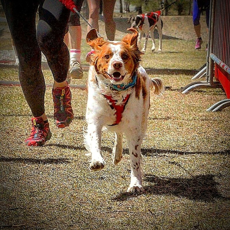Run Run Run Dog Domestic Animals Mammal Looking At Camera Pets Low Section One Animal Outdoors Furry Friends Dogs Dogslife Pet Pet Photography  Canicross Dogs Of EyeEm Doglovers Dog Photography Running Run Pet