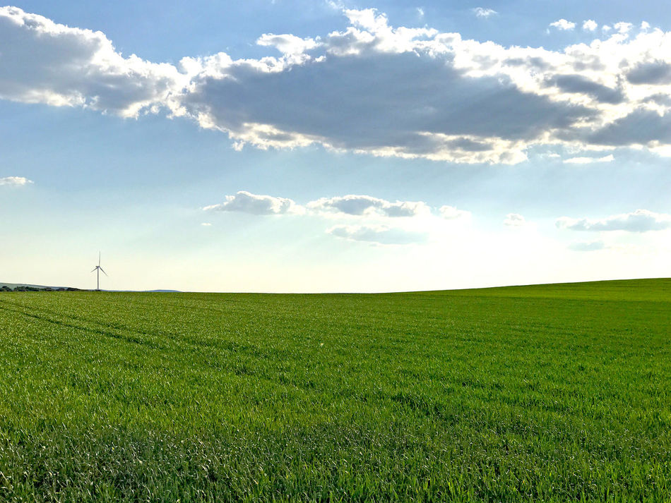 Agricultural Land Agriculture Barley Beauty In Nature Cloud - Sky Cloudy Day Field Grass Green Color Growth Landscape Nature No People Oaks Outdoors Rural Scene Rural Scenes Scenery Scenics Sky Tranquil Scene Tranquility Wheat Wheat Field