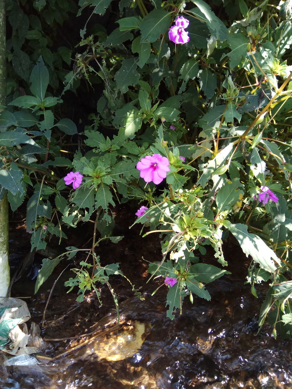growth, flower, leaf, nature, plant, beauty in nature, green color, fragility, no people, freshness, blooming, outdoors, tree, day, periwinkle