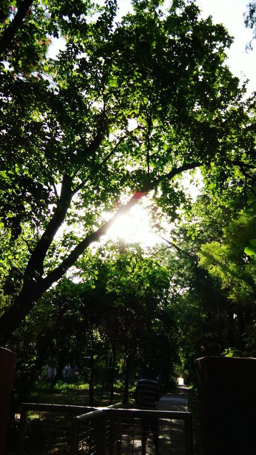 Tree Outdoors No People Nature Day Tranquility Low Angle View Growth Green Color Branch Beauty In Nature Sky Tree And Sunlight Tree And Sun Tree And Sunshine Tree And Bushes Treelovers Trees Collection Green Nature Skylight