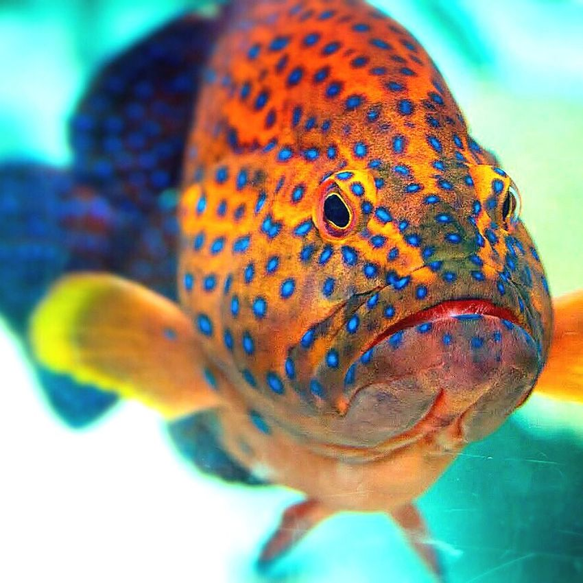 Exotic Fish another Golden Oldie from back in the day Nature