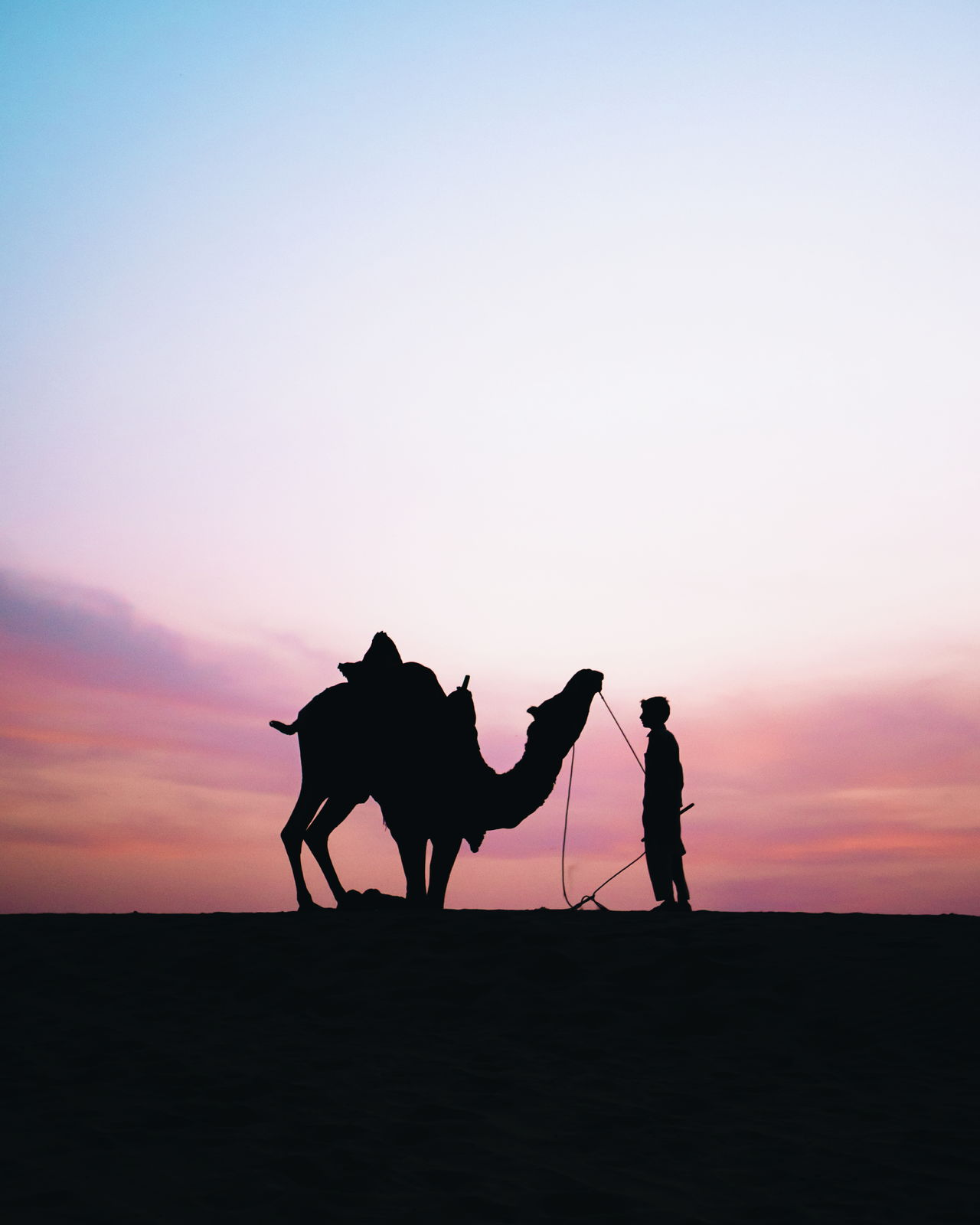 Beautiful stock photos of elefant, sunset, silhouette, horse, riding