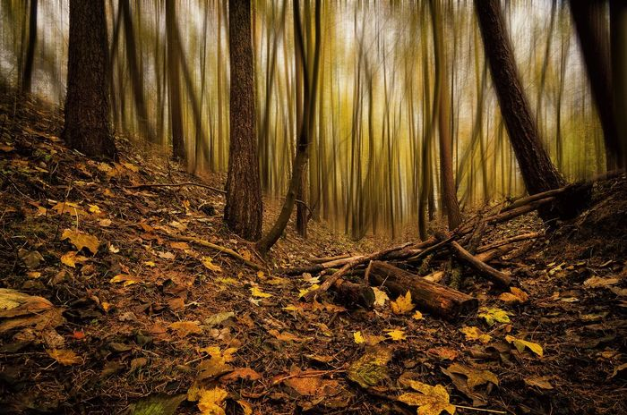 Golden Shade Autumn Colors Autumn Leaves EyeEm Best Edits EyeEm Best Shots EyeEm Nature Lover Fantasy Forest Leaves Lonelyplanet Mystery Nature Nature_collection Sombre Tree Tree_collection  Winter Wood WoodLand Woods