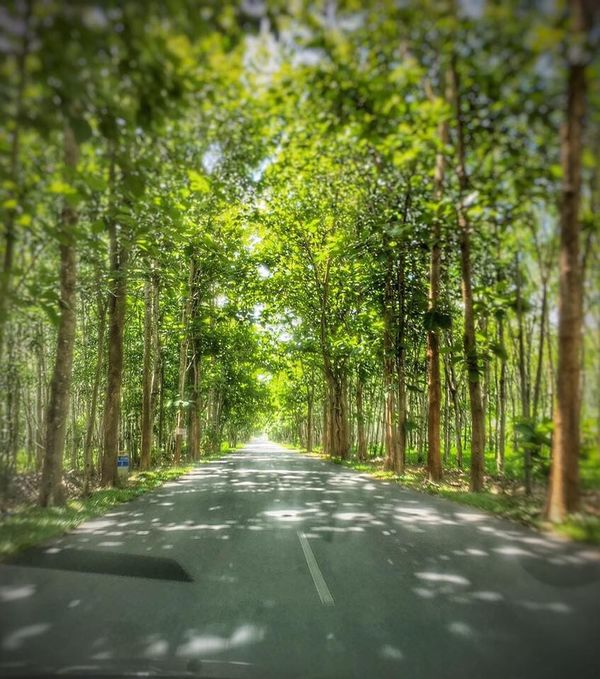 Nature Tree Road Beauty In Nature Rubberplantation