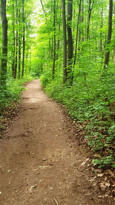 Tree Forest Nature Green Color The Way Forward Beauty In Nature WoodLand Outdoors Lush Foliage Tree Trunk Tranquility No People Lush - Description Freshness A Walk In The Forest Pathway In The Forest Path In Nature Path Path In The Woods Path In The Forest The Week On EyeEm Rattlesnake Point Ontario Canada Beauty In Nature Plants And Trees Lost In The Landscape
