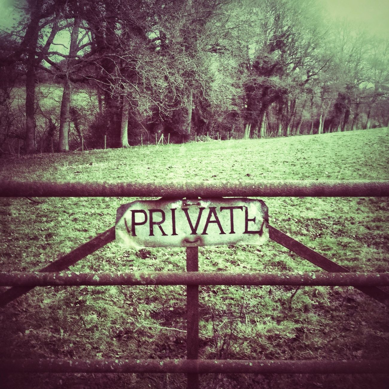 Private Party - trees only