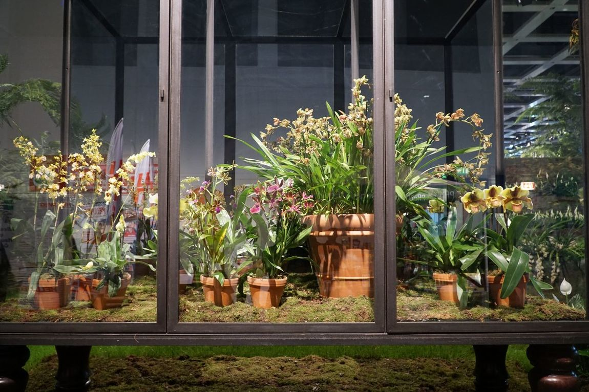 Orchids Orchid Blossoms Flowers Green Color Beautiful Beauty In Nature Blossom Grüne Woche Berlin