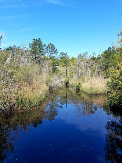 Day Outdoors Beauty In Nature No People Blue Water Reflection Nature Tree Sky Beauty In Nature Landscape Tranquility Lake Tranquil Scene Rural Scene Wetland Agriculture Ravenel South Carolina. Cawcawcountypark Natural Parkland Nature Plant Forest