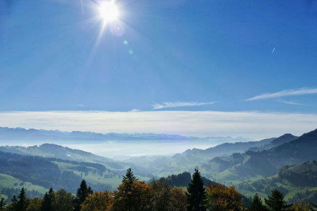 Atzmännig Zürcher Oberland Alps Switzerland Foggy Landscapes Nature Hiking Sun Blue Sky Outdoors Scenics Fall Trees No People