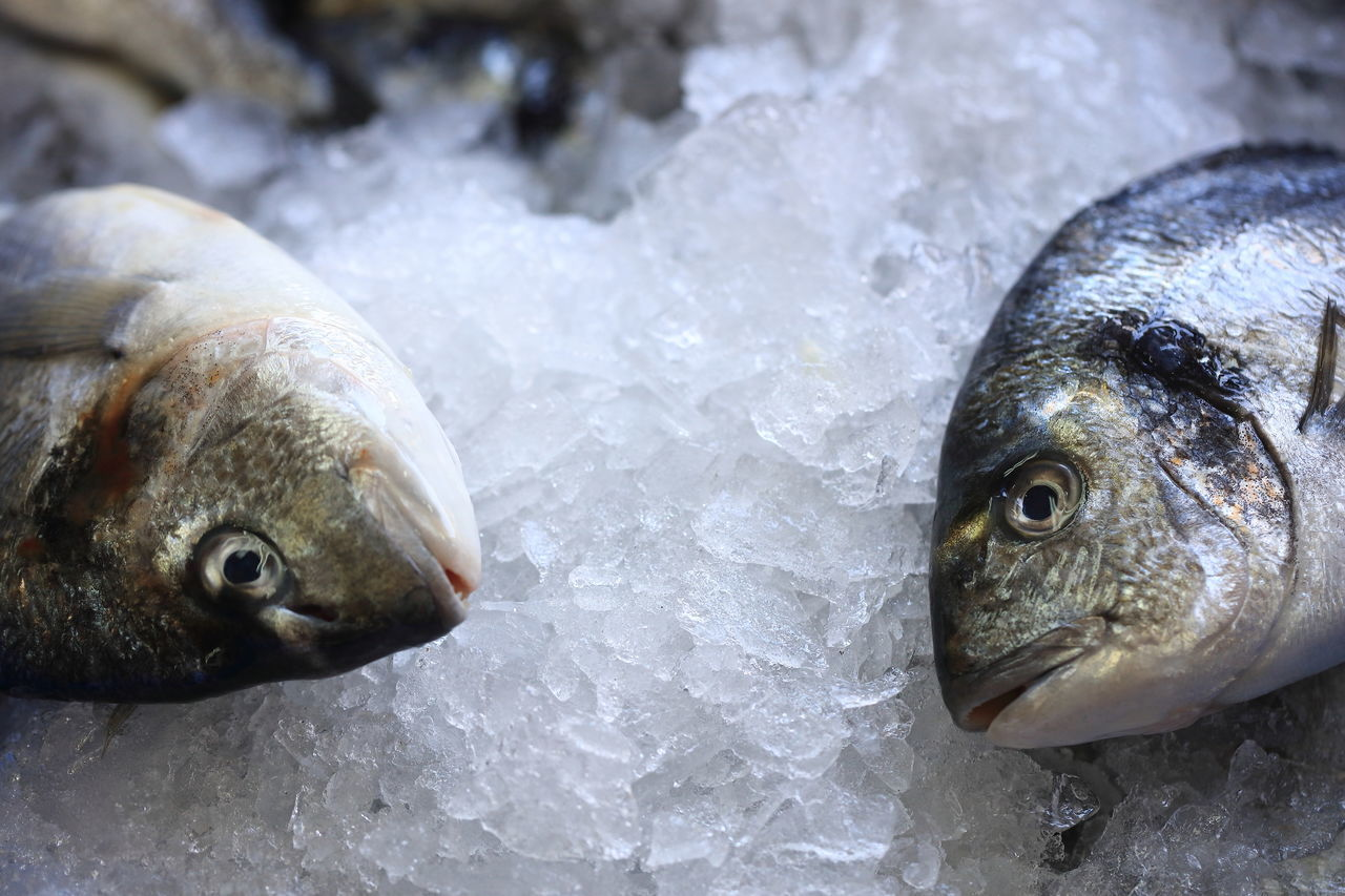 Animal Themes Cold Temperature Eye In Eye Face To Face Fish Fish Market Food Food And Drink Freshness Frozen Healthy Eating Ice Market Nonverbal Raw Food Seafood Silence Is Golden Silence Speaks Talking To You Two Buddies