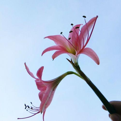 Flower 🌷