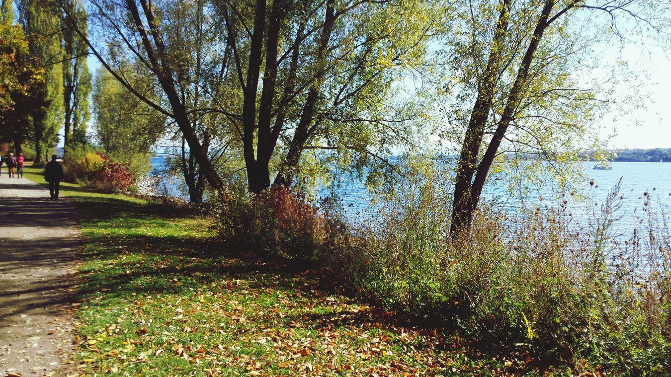 AUTUMN LEAFES Autumn Colors Of Autumn Eye Em Nature Lover Nature Photography Trees Beautiful Nature Autumn Leafs Leafs Lake Konstanz Überlingen
