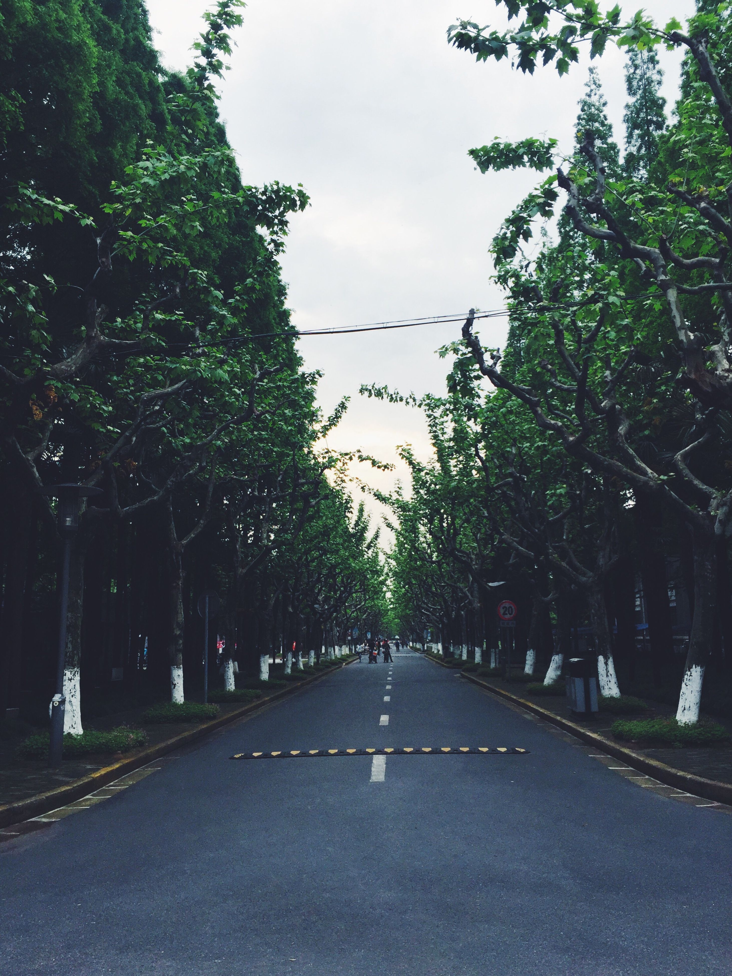 the way forward, tree, diminishing perspective, road, transportation, vanishing point, street, treelined, road marking, growth, empty, in a row, empty road, day, green color, outdoors, street light, sky, no people, nature