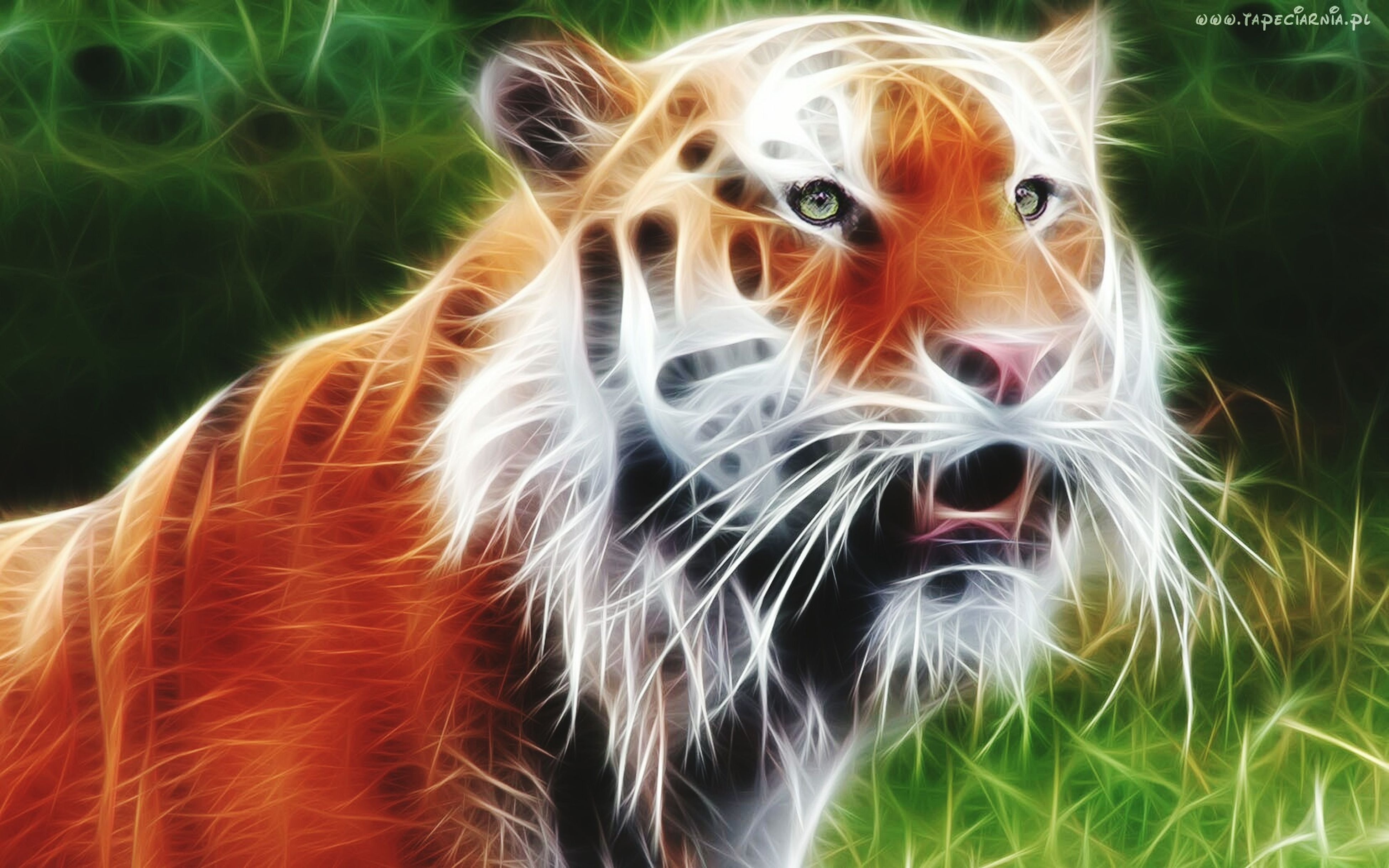 animal themes, mammal, one animal, domestic animals, pets, close-up, animal head, animal hair, animal body part, whisker, focus on foreground, domestic cat, zoology, no people, day, feline, animal, vertebrate, nature, part of